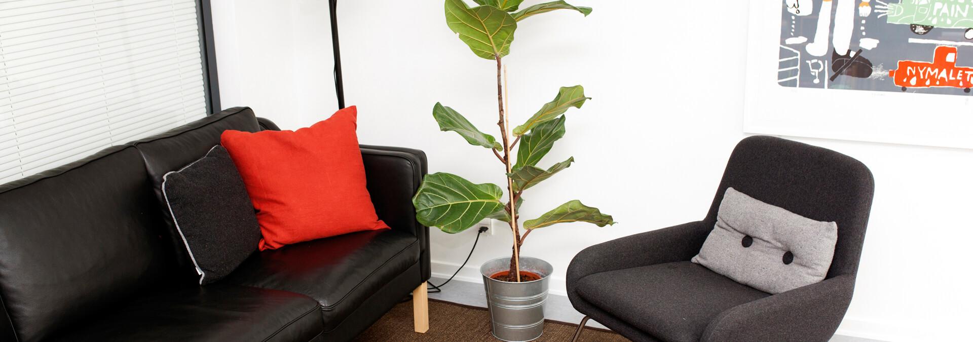 Stue på krisecenter med sofa, stol og plante