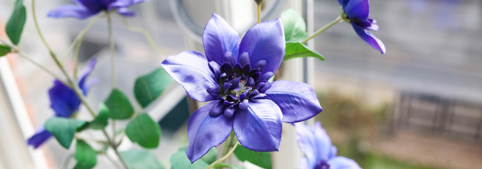 Blå blomst i vindue på krisecenter